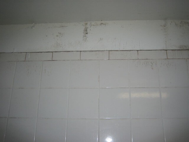 Mold removal bathroom