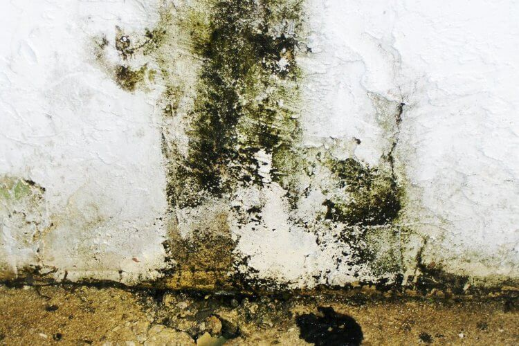 mold removal solution