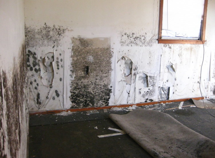 black mold test